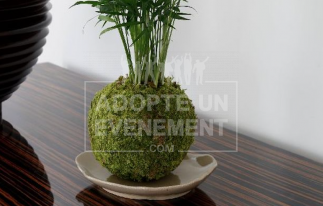 ART VEGETAL JAPONAIS REALISATION VISIO-ATELIER ADOPTE UN EVENEMENT KIT PLANTES SUSPENSION KOKEDAMA | adopte-un-evenement